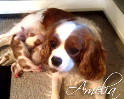 Meet Amelia, Our Female Cavalier