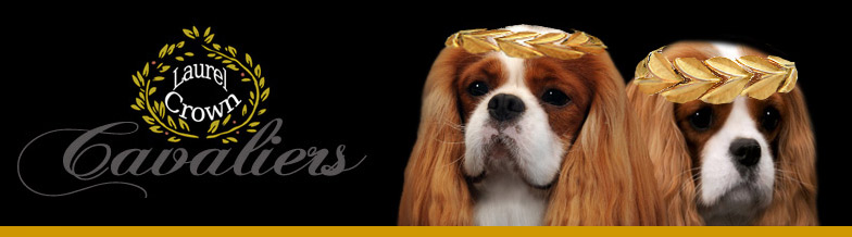 Laurel Crown Cavaliers